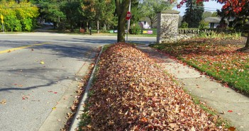 leaf-collection-front-10-28-14